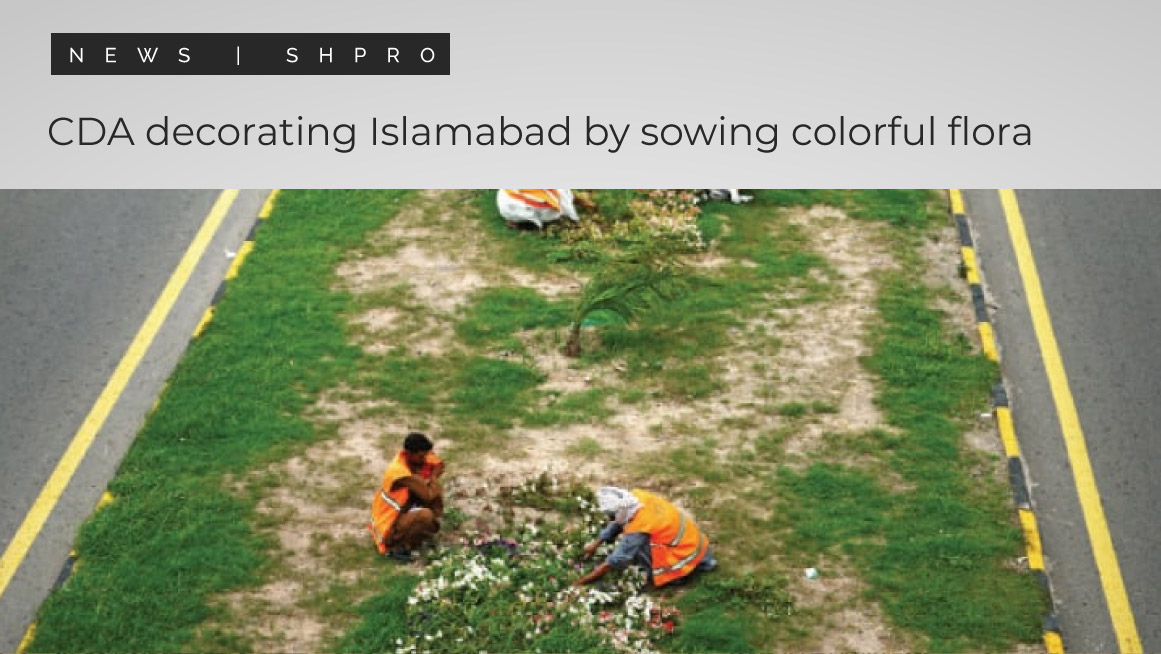 CDA decorating Islamabad by sowing colorful flora