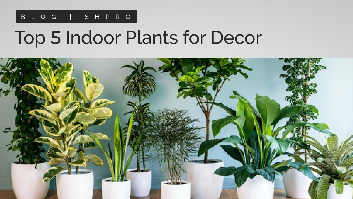 Top 5 indoor plants for decoration